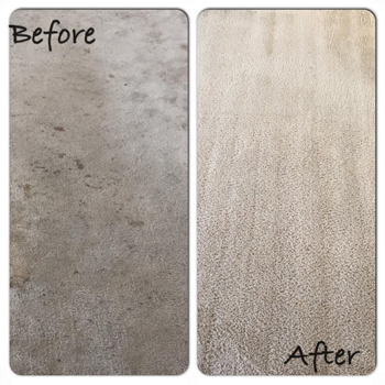 Half off 5 Rooms of Carpet Cleaning