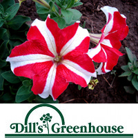 Dills Greenhouse - Save 50% and Get $20 for only $10!