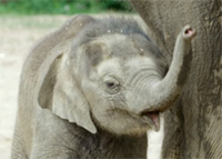 75% OFF Family 4-Pack of Tix to Columbus Zoo before New Year's