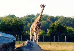 African Safari Wildlife Park Family Fun Pack