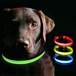LED Dog Collar- $13.00 with Free Shipping