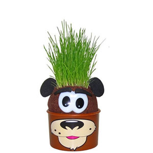 Set of 3 Grow-a-Head Kids Crafts- $12 with Free Shipping
