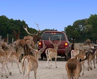 African Safari Wildlife Park in Port Clinton, OH!