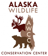 Alaska Wildlife Conservation Center - Walk on the Wildside Tour- Family Four Pack