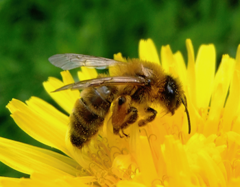 What's the Buzz Event at Pittsburgh Botanic Garden!