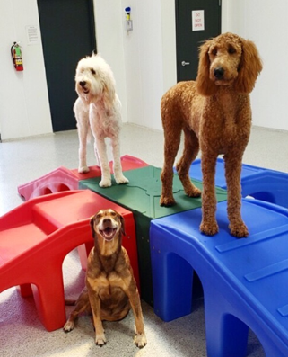 The Dog Stop - Buy One Day of Daycare, Get One Free!