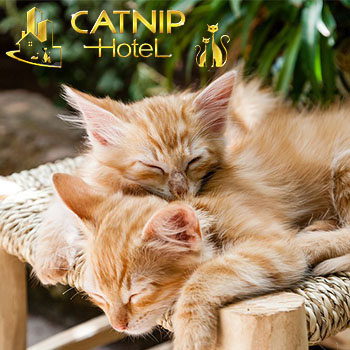 Catnip Hotel - Buy One Get One Day Room